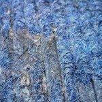 Kleidermotten erkennen: Nahaufnahme-Teppich_mit_Mottenfraß