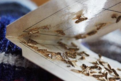 Die Pheromonfalle richtig nutzen | Motten bekämpfen