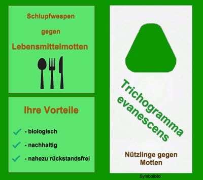 Mottenfrei, biologische Mottenbekämpfung, Schlupfwespen gegen Motten, Mottenfalle, drei Lieferungen à 12000 Trichogramma